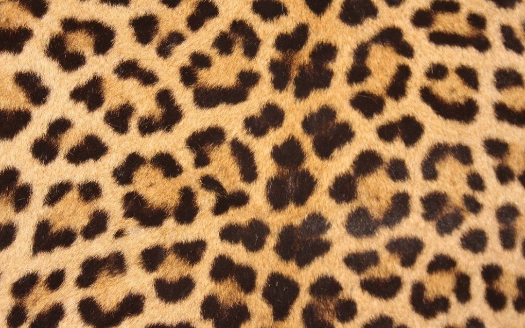 WIN your favourite leopard print top