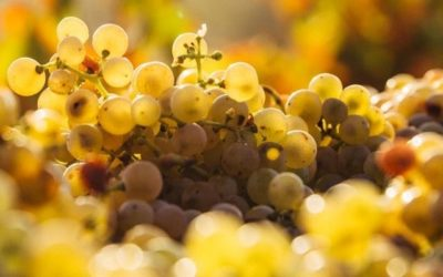 How to help the wine industry